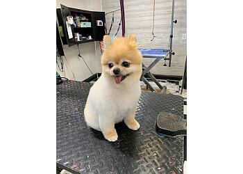 Fresno pet grooming 100% Fancy Grooms