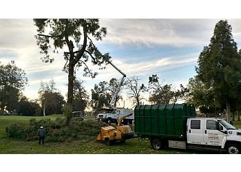 Orange tree service 3D Tree Services, Inc.