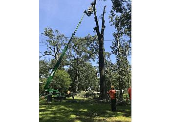 Jackson tree service A-1 Discount Tree & Lawn Service