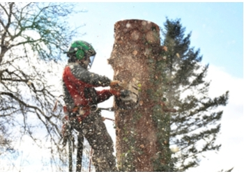 Port St Lucie tree service A-1 Miller's Tree Services