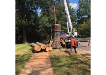 Charlotte tree service AAA Tree Experts Inc.