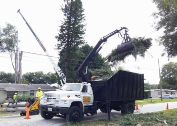 St Petersburg tree service ABC 1-2-Tree Inc.