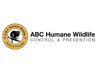 Chicago animal removal ABC Humane Wildlife Control and Prevention Inc.