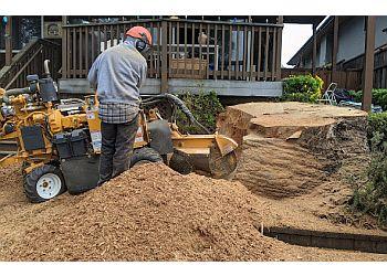 Salinas tree service A B Tree Service