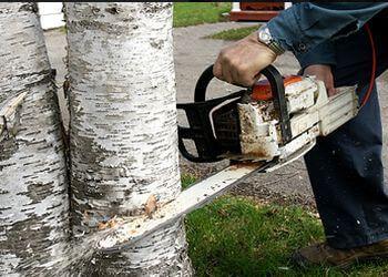 Irvine tree service A Cabral Tree Service
