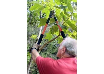 Carrollton tree service A Cut Above Tree and Landscaping Services