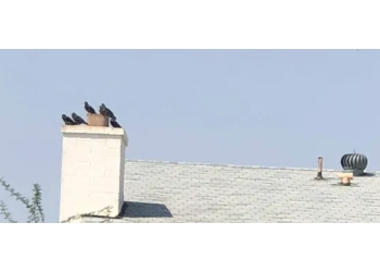 3 Best Chimney Sweep In Mesa Az Threebestrated