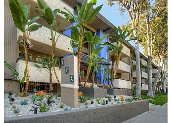 Pasadena apartments for rent AVA Pasadena  Apartments