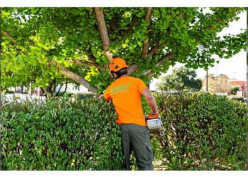 Louisville tree service Abundant Tree Care
