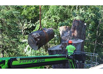 Madison tree service Accurate Tree Service, LLC
