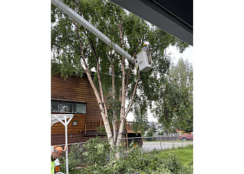 Anchorage tree service Affordable Tree Removal