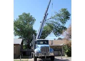 Gilbert tree service Agave Tree & Landscape