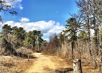 Albany hiking trail Albany Pine Bush