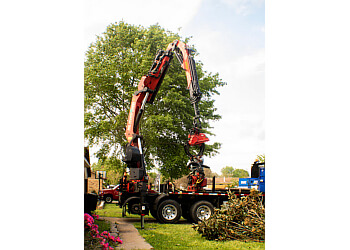 Shreveport tree service All About Trees