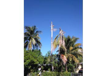 Miami tree service All Dade Tree Services