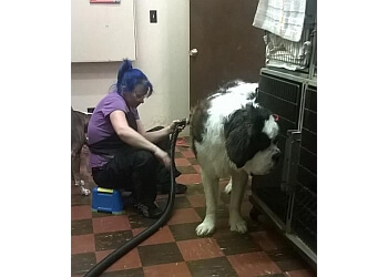 Rockford pet grooming All Paws Beauty Salon