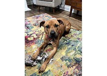 Columbus dog training All Purpose K-9 LLC