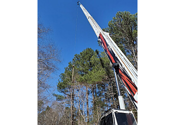 Cary tree service Allen Tree Experts