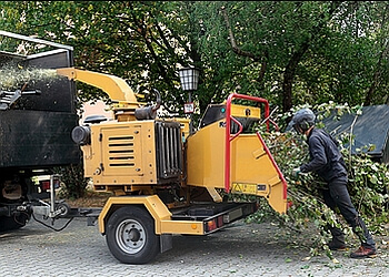 Detroit tree service Al's Professional Tree Service