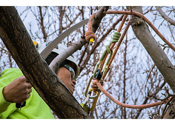 Reno tree service American Arborists