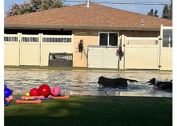 Sacramento pet grooming Animal Den