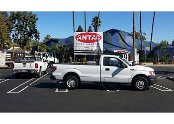 San Diego pest control company Antac Pest Control, Inc