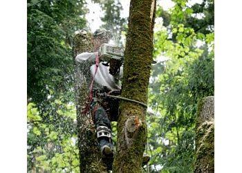 Fremont tree service Any Time Tree Specialist