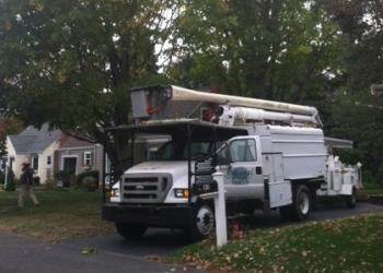 Bridgeport tree service Arboreal Inc.