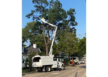 Frisco tree service Arboriculture services