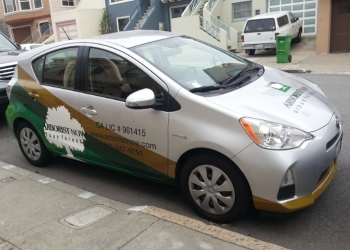 San Francisco tree service Arborist Now, Inc