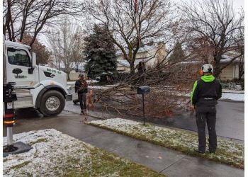 Salt Lake City tree service Arborplus