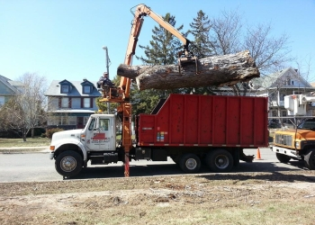Minneapolis tree service Arbortech Stump & Tree Removal