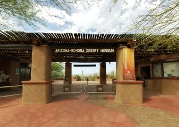 Tucson places to see Arizona Sonora Desert Museum