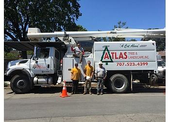 Santa Rosa tree service Atlas Tree & Landscape, Inc.