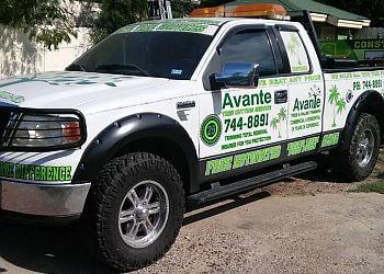 Laredo tree service Avante Tree Service