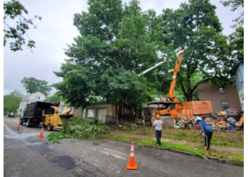 Newark tree service  BJS Tree Service LLC
