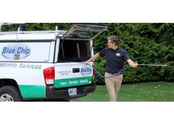 St Louis pest control company BLUE CHIP PEST SERVICES