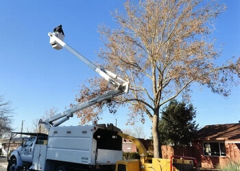 Albuquerque tree service Baca's Trees