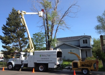 Lakewood tree service Bailey Tree LLC
