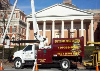 Baltimore tree service Baltimore Tree Experts