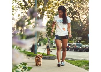 New York dog walker BarkBud Dog Walkers