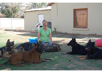3 Best Dog Training in El Paso, TX - ThreeBestRated