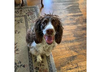 Baltimore dog walker Barks & Blooms