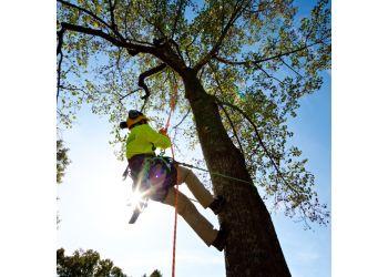 Stamford tree service Bartlett Tree Experts