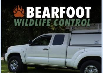 Hartford animal removal Bearfoot Wildlife Control