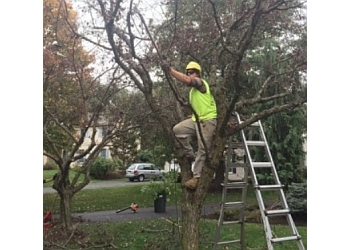 Allentown tree service Belles Tree Service Inc.