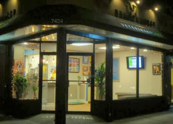 New York veterinary clinic Bensonhurst Veterinary Care