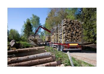Glendale tree service Bestway Tree Service