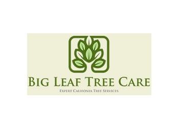 Rancho Cucamonga tree service Big Leaf Tree Care