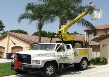 Miami tree service Big Ron's Tree Service LLC.